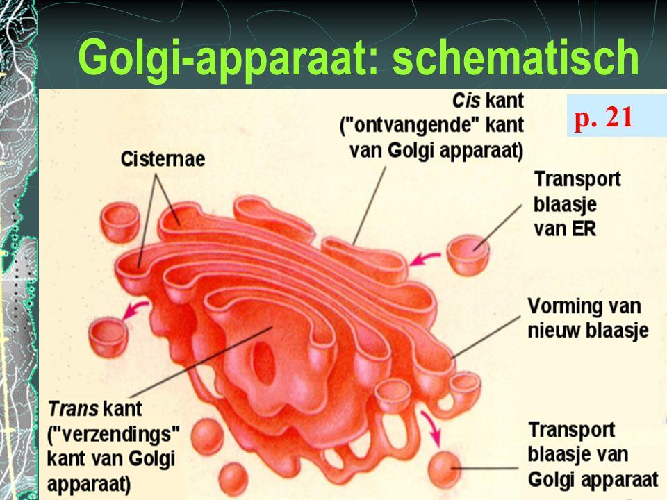Golgi-apparaat: schematisch p. 21