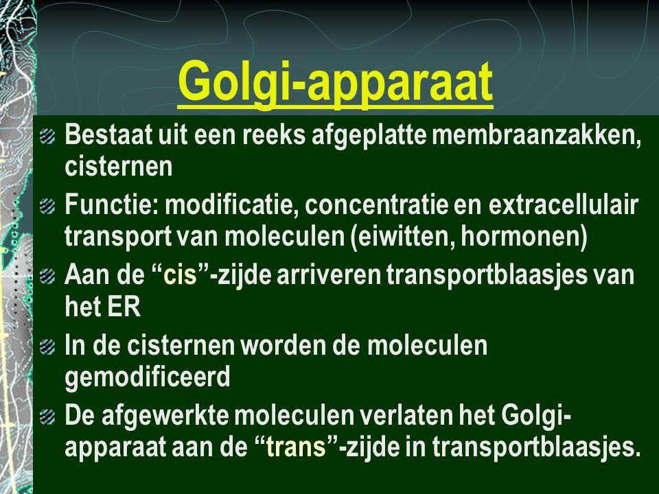 Golgi-apparaat Bestaat uit een reeks afgeplatte membraanzakken, cisternen Functie: modificatie, concentratie en extracellulair transport van moleculen
