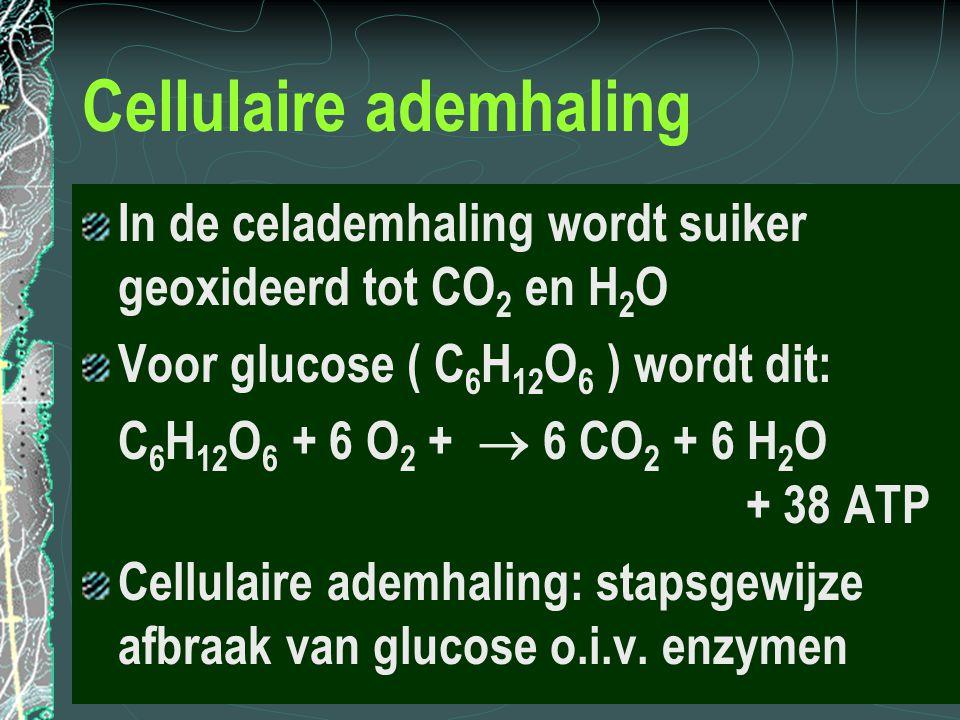 Cellulaire ademhaling In de celademhaling wordt suiker geoxideerd tot CO 2 en H 2 O Voor glucose ( C 6 H 12 O 6 ) wordt dit: C 6 H 12 O 6 + 6 O 2 + 