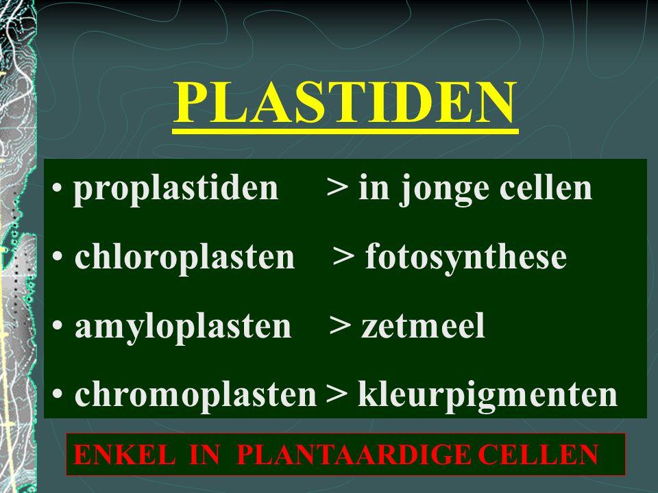 PLASTIDEN proplastiden > in jonge cellen chloroplasten > fotosynthese amyloplasten > zetmeel chromoplasten > kleurpigmenten ENKEL IN PLANTAARDIGE CELL