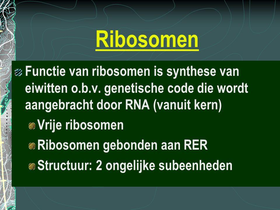 Ribosomen Functie van ribosomen is synthese van eiwitten o.b.v. genetische code die wordt aangebracht door RNA (vanuit kern) Vrije ribosomen Ribosomen