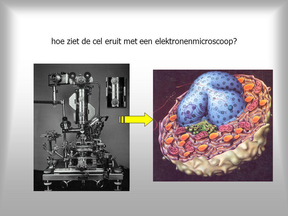 hoe ziet de cel eruit met een elektronenmicroscoop?
