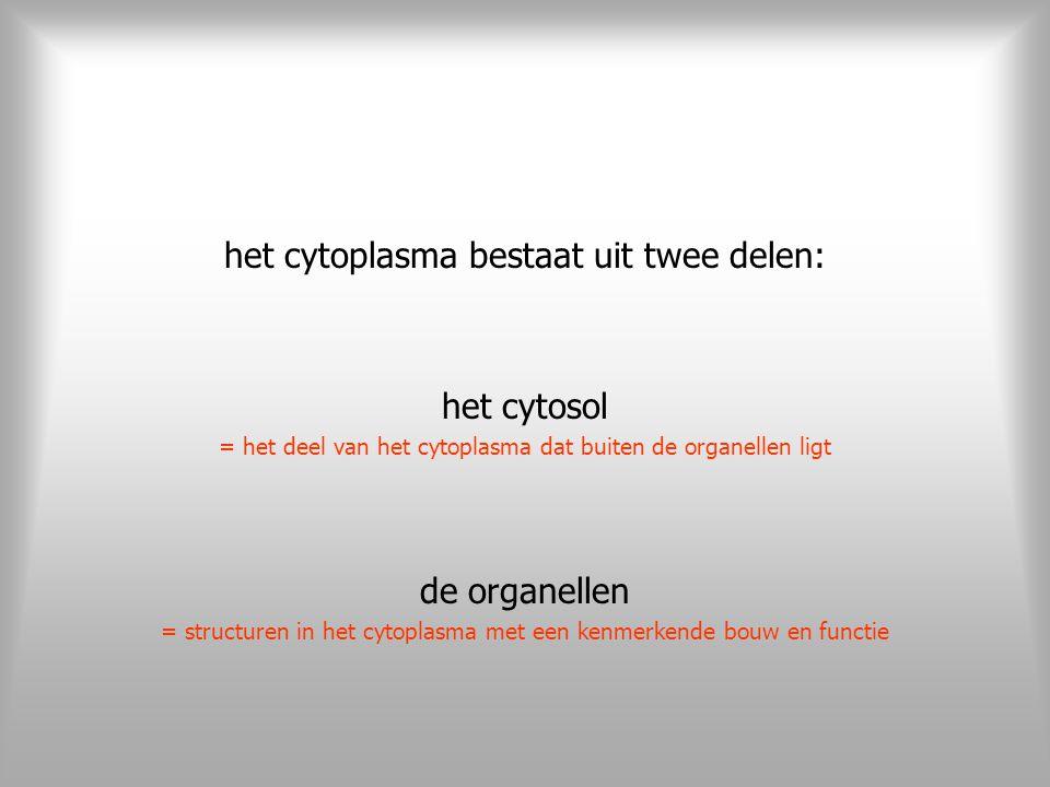 op het eerste zicht lijkt het cytosol op een kleurloze gelei wanneer we echter goed kijken, treffen we het cytoskelet aan in dit cytosol