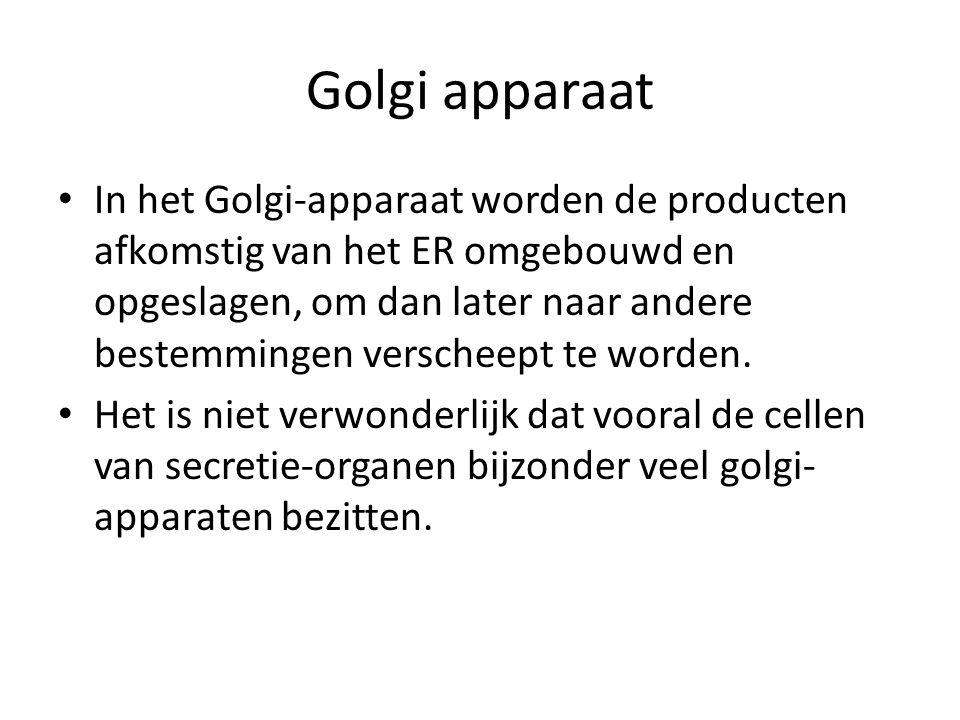 In het Golgi-apparaat worden de producten afkomstig van het ER omgebouwd en opgeslagen, om dan later naar andere bestemmingen verscheept te worden. He