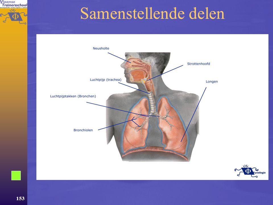 152 Aanpassingen van het ademhalingssysteem  Het ademhalingssysteem –Samenstellende delen –Ventilatie –Gasuitwisseling  Aanpassingen –Regeling –Acute aanpassingen –Chronische aanpassingen