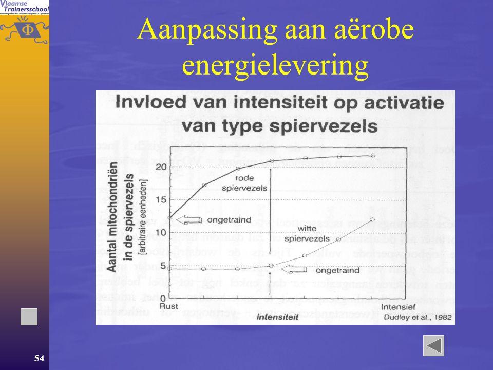 53 Anaërobe energielevering  Toename [ATP], [CP] en [glycogeen]  Toename enzymes  Toename van de mogelijkheid om hoge concentraties lactaat voort te brengen.