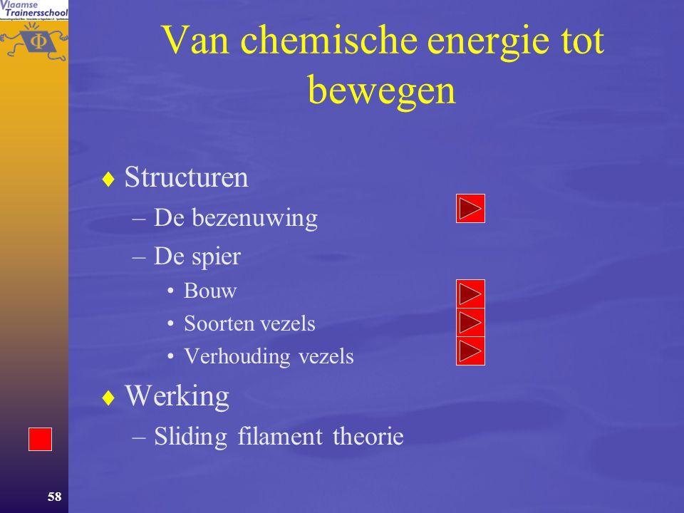 57 Het neuromusculair systeem  Van chemische energie tot beweging –Structuren –Werking  Aanpassingen –Acute –Chronische  Domeinen van het NM-systeem –Spierkracht –Snelheid –Lenigheid
