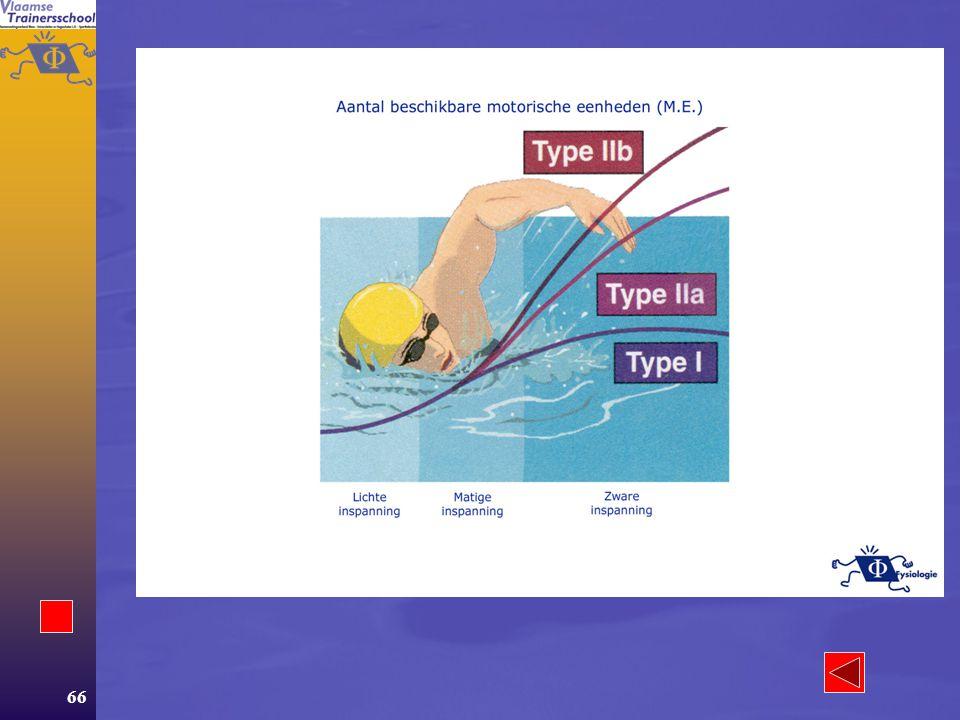 65 Aanpassingen  Acute –FT of ST tijdens inspanning? –Regeling van de spierkracht Spierkracht en prikkel Spierkracht en lengte van de spier Spierkrac