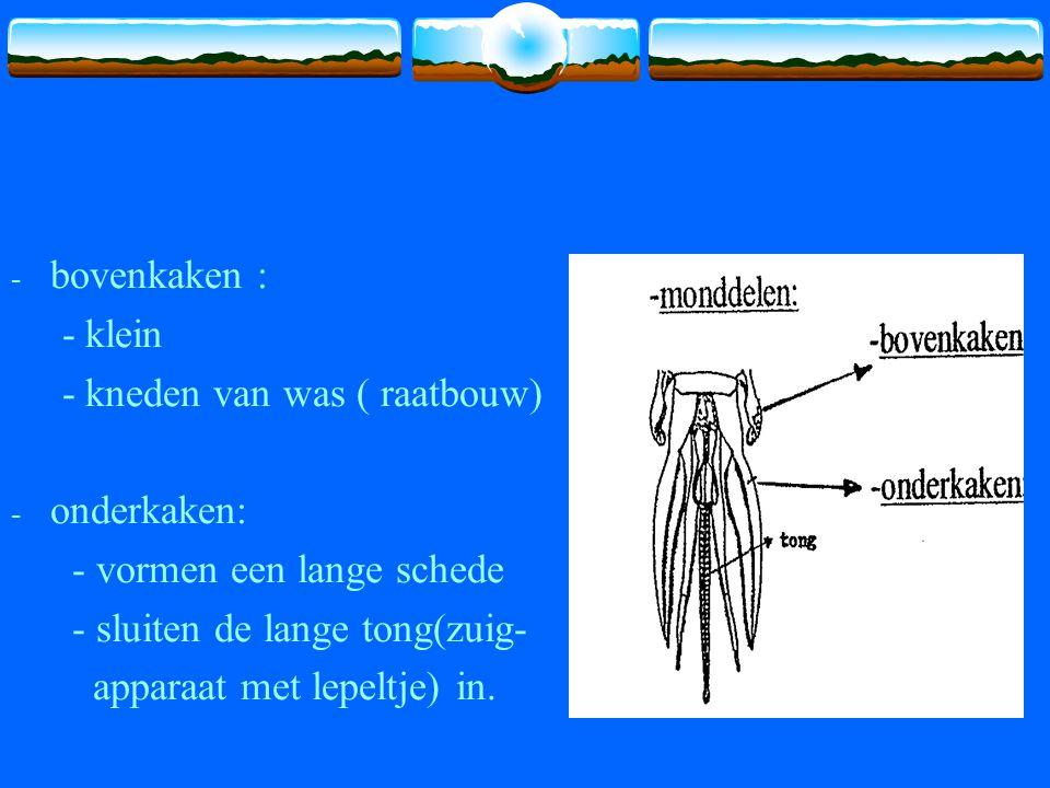 - bovenkaken : - klein - kneden van was ( raatbouw) - onderkaken: - vormen een lange schede - sluiten de lange tong(zuig- apparaat met lepeltje) in.