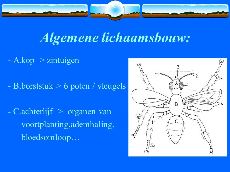 Algemene lichaamsbouw: - A.kop > zintuigen - B.borststuk > 6 poten / vleugels - C.achterlijf > organen van voortplanting,ademhaling, bloedsomloop…