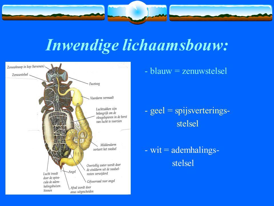 Inwendige lichaamsbouw: - blauw = zenuwstelsel - geel = spijsverterings- stelsel - wit = ademhalings- stelsel