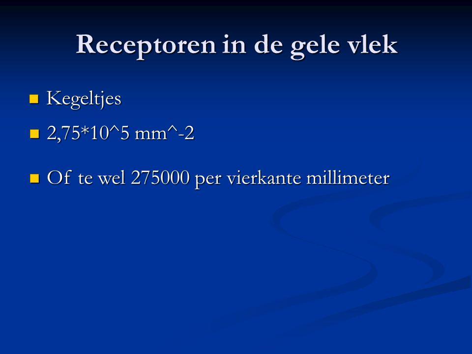 Receptoren in de gele vlek Kegeltjes Kegeltjes 2,75*10^5 mm^-2 2,75*10^5 mm^-2 Of te wel 275000 per vierkante millimeter Of te wel 275000 per vierkant