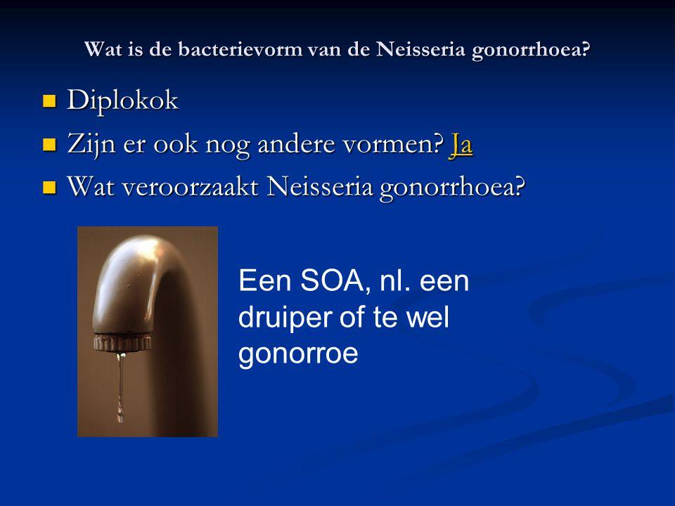 Wat is de bacterievorm van de Neisseria gonorrhoea? Diplokok Diplokok Zijn er ook nog andere vormen? Ja Zijn er ook nog andere vormen? JaJa Wat veroor