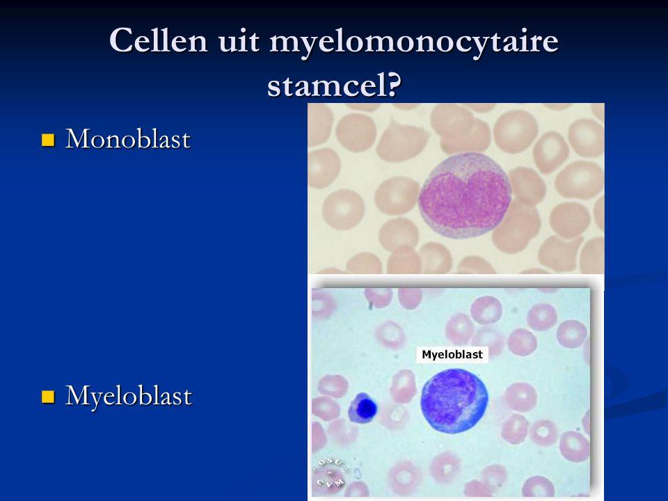 Cellen uit myelomonocytaire stamcel? Monoblast Monoblast Myeloblast Myeloblast