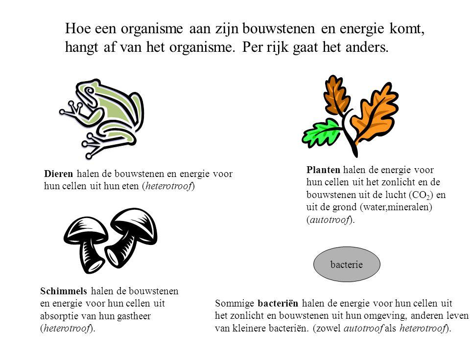 Hoe een organisme aan zijn bouwstenen en energie komt, hangt af van het organisme. Per rijk gaat het anders. bacterie Dieren halen de bouwstenen en en