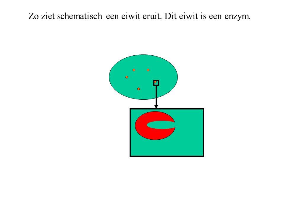 Zo ziet schematisch een eiwit eruit. Dit eiwit is een enzym.