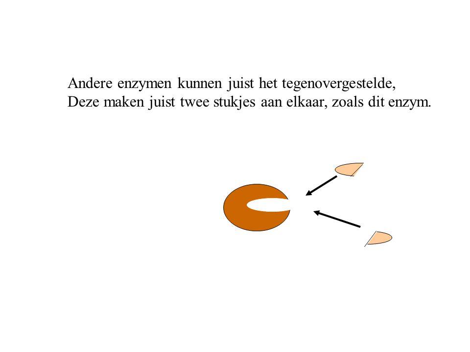 Andere enzymen kunnen juist het tegenovergestelde, Deze maken juist twee stukjes aan elkaar, zoals dit enzym.