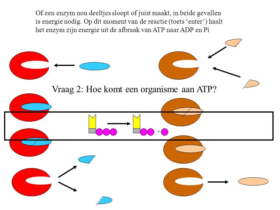+ Of een enzym nou deeltjes sloopt of juist maakt, in beide gevallen is energie nodig. Op dit moment van de reactie (toets 'enter') haalt het enzym zi