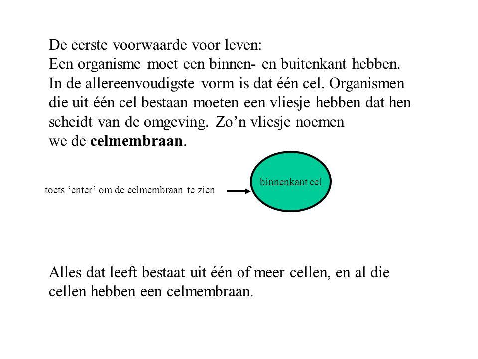 Dan wordt het overgeschrevene vertaald naar een eiwit (translatie).