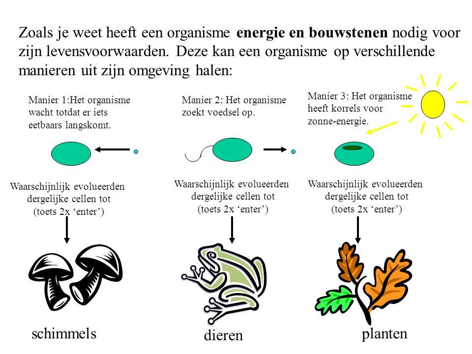 Zoals je weet heeft een organisme energie en bouwstenen nodig voor zijn levensvoorwaarden. Deze kan een organisme op verschillende manieren uit zijn o
