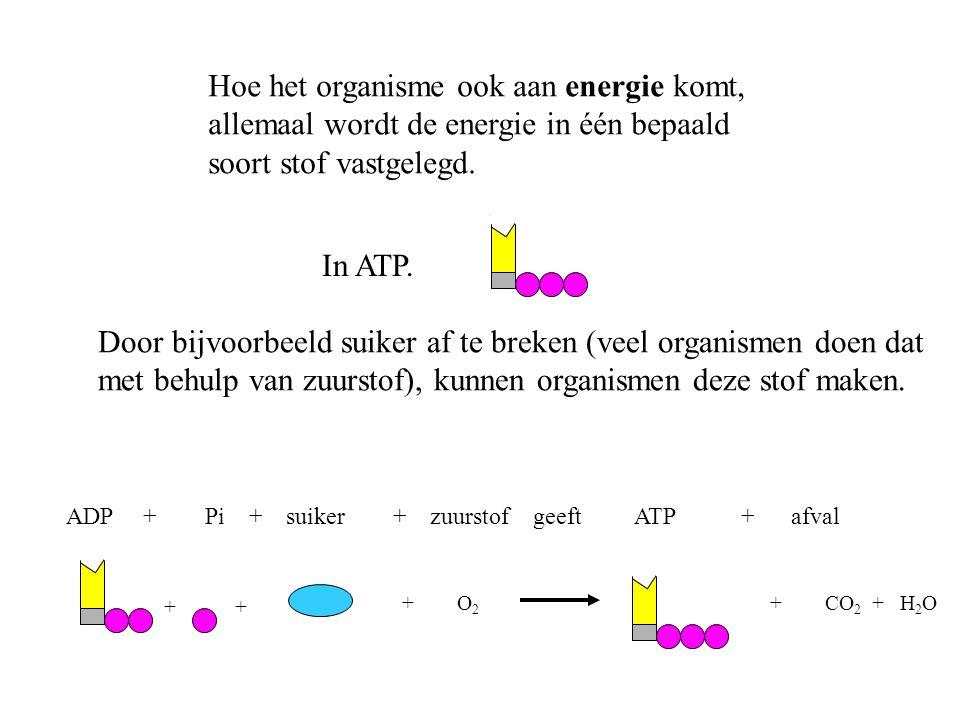 Hoe het organisme ook aan energie komt, allemaal wordt de energie in één bepaald soort stof vastgelegd. In ATP. Door bijvoorbeeld suiker af te breken