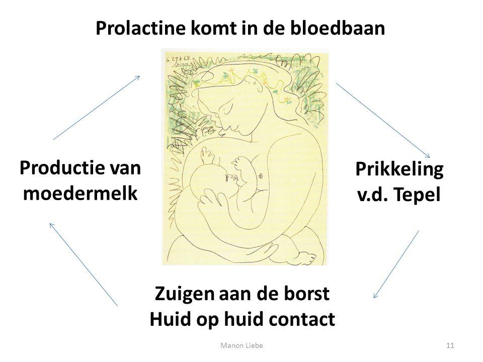Prolactine komt in de bloedbaan Prikkeling v.d. Tepel Zuigen aan de borst Huid op huid contact Productie van moedermelk 11Manon Liebe