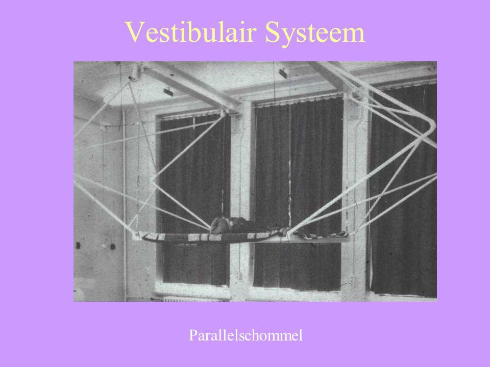 Vestibulair Systeem Parallelschommel