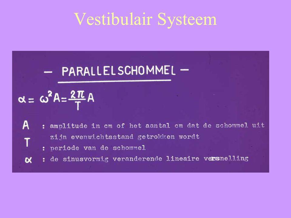 Vestibulair Systeem