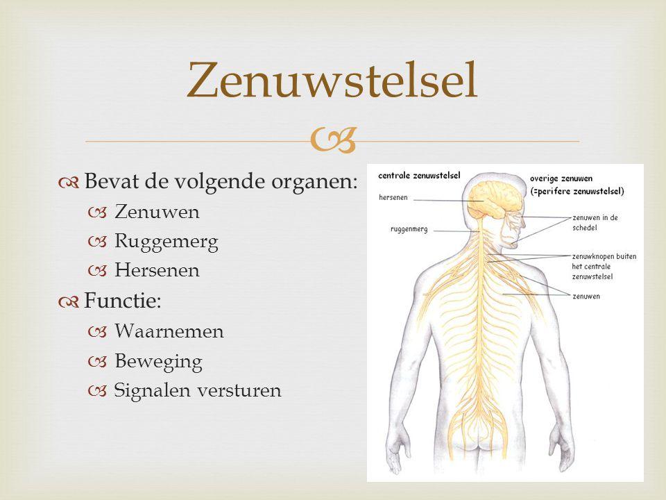   Bevat de volgende organen:  Zenuwen  Ruggemerg  Hersenen  Functie:  Waarnemen  Beweging  Signalen versturen Zenuwstelsel