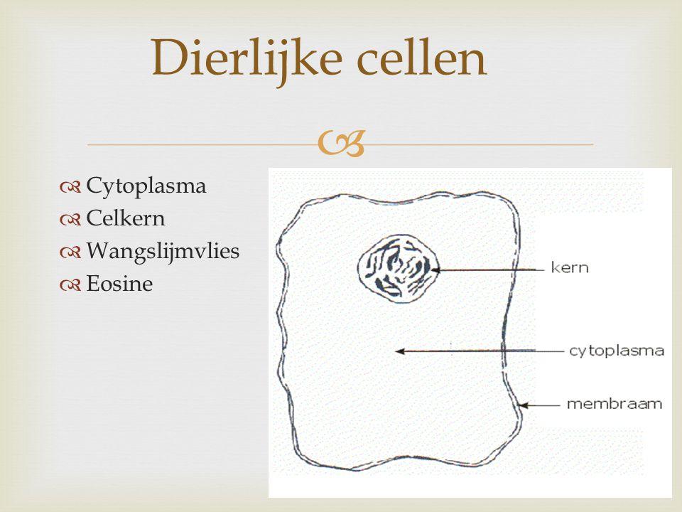   Cytoplasma  Celkern  Wangslijmvlies  Eosine Dierlijke cellen