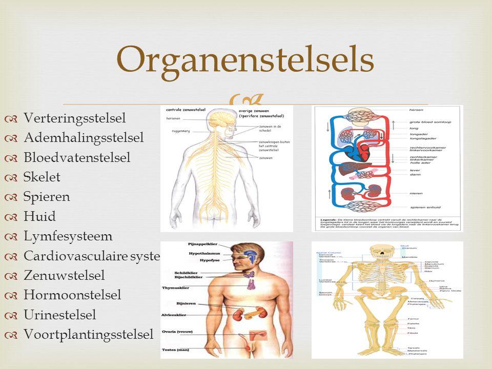   Verteringsstelsel  Ademhalingsstelsel  Bloedvatenstelsel  Skelet  Spieren  Huid  Lymfesysteem  Cardiovasculaire systeem  Zenuwstelsel  Ho