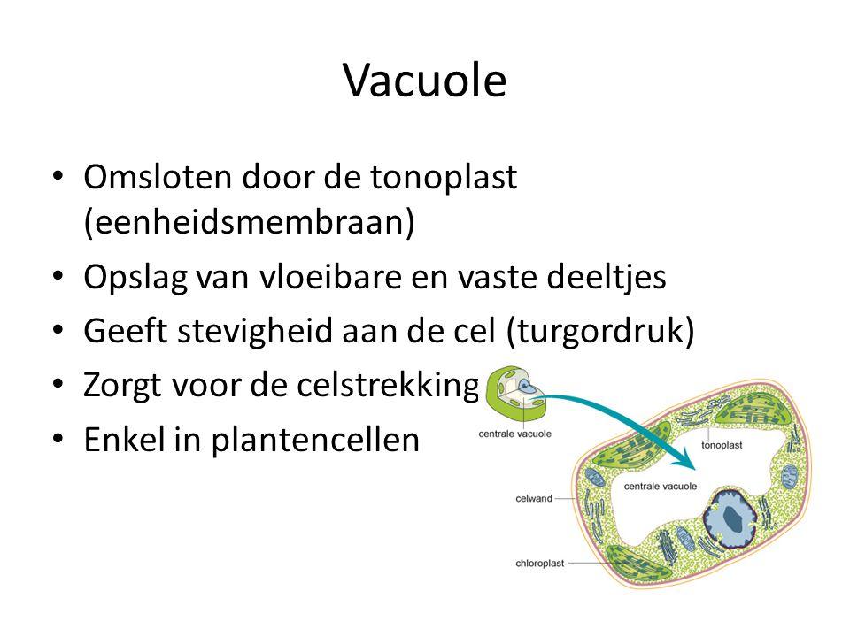 Vacuole Omsloten door de tonoplast (eenheidsmembraan) Opslag van vloeibare en vaste deeltjes Geeft stevigheid aan de cel (turgordruk) Zorgt voor de celstrekking (groei) Enkel in plantencellen