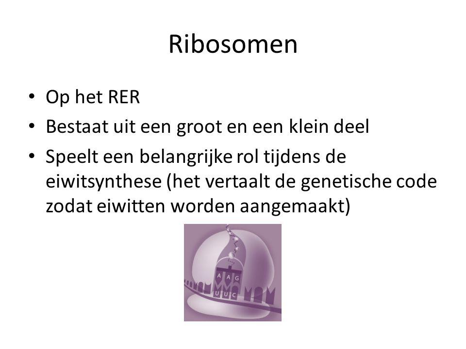 Ribosomen Op het RER Bestaat uit een groot en een klein deel Speelt een belangrijke rol tijdens de eiwitsynthese (het vertaalt de genetische code zodat eiwitten worden aangemaakt)