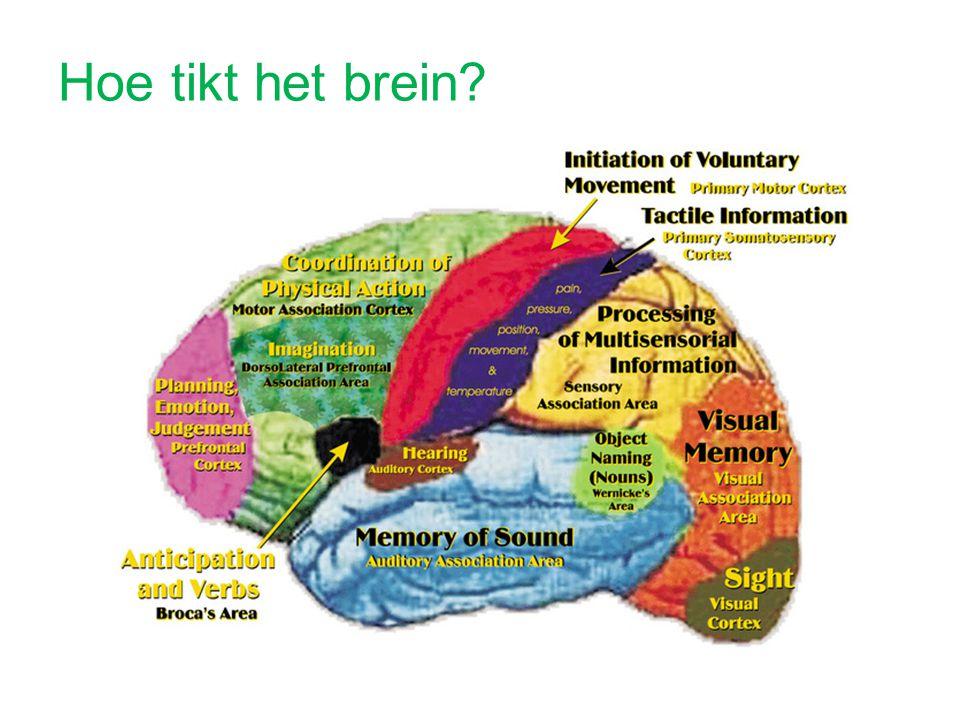 Hoe tikt het brein?
