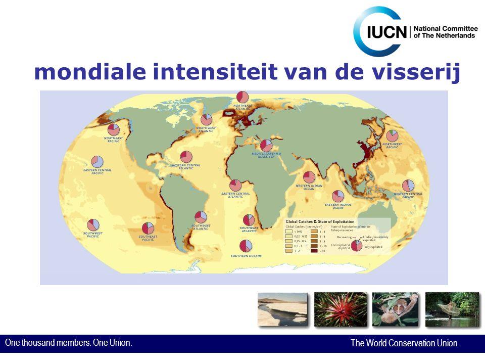 One thousand members. One Union. The World Conservation Union Dank voor uw aandacht! www.iucn.nl