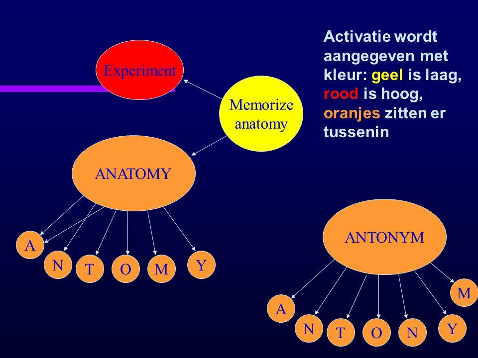 ANATOMY A N TOM Y Experiment Memorize anatomy Activatie wordt aangegeven met kleur: geel is laag, rood is hoog, oranjes zitten er tussenin ANTONYM A N