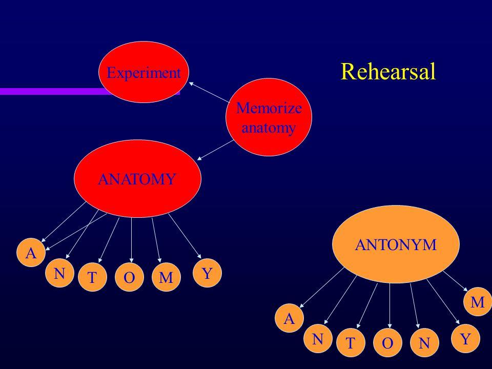 ANATOMY A N TOM Y Memorize anatomy Experiment Rehearsal ANTONYM A N TON Y M