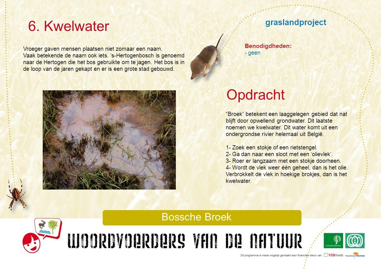 graslandproject 7.Riet Bossche Broek Riet is een grasachtige plant.