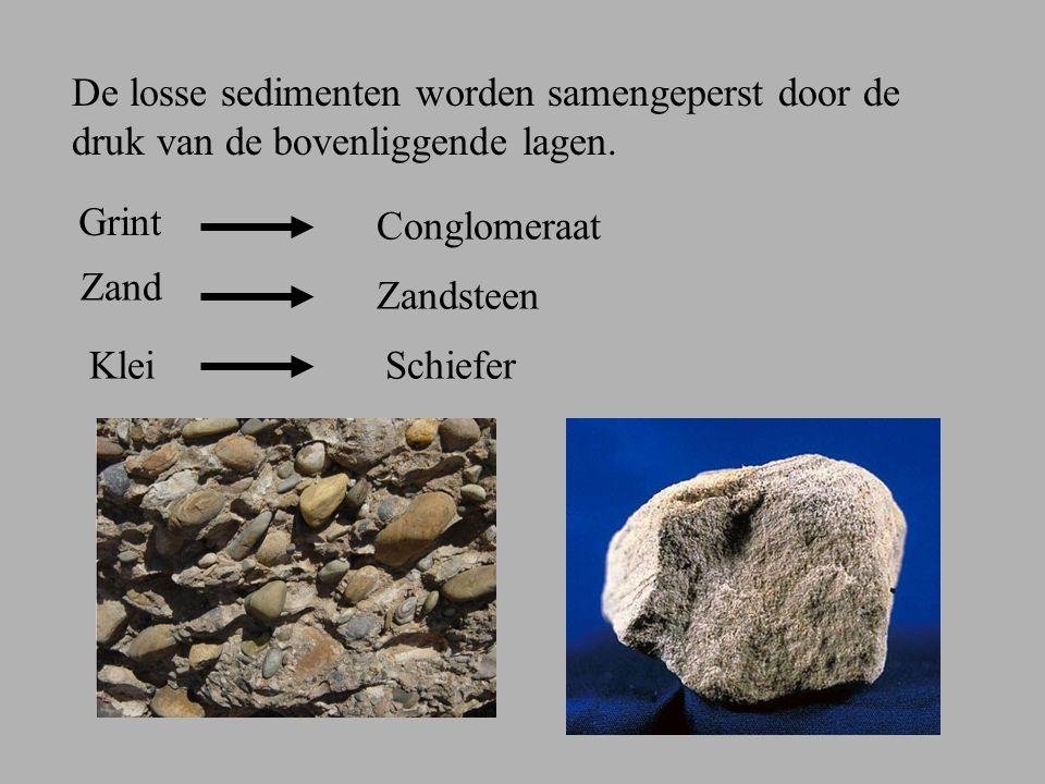 2.Organische sedimentgesteenten Gevormd uit afgestorven planten en dieren.
