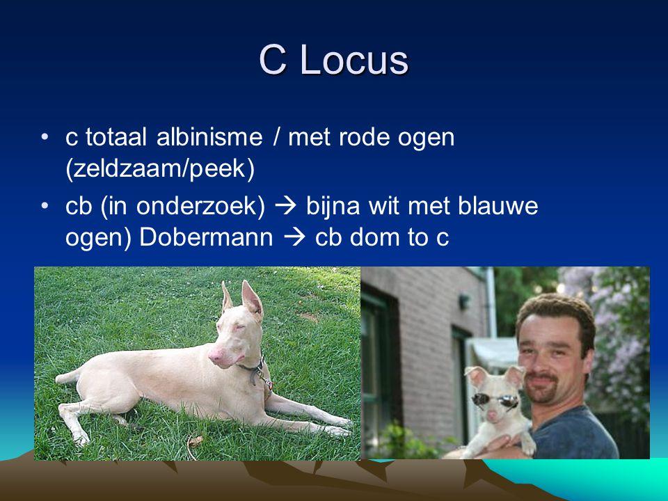 C Locus c totaal albinisme / met rode ogen (zeldzaam/peek) cb (in onderzoek)  bijna wit met blauwe ogen) Dobermann  cb dom to c