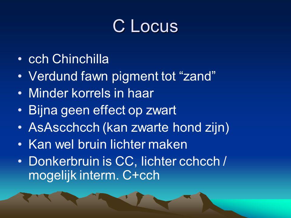 "C Locus cch Chinchilla Verdund fawn pigment tot ""zand"" Minder korrels in haar Bijna geen effect op zwart AsAscchcch (kan zwarte hond zijn) Kan wel bru"