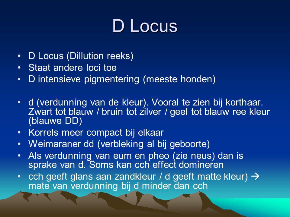 D Locus D Locus (Dillution reeks) Staat andere loci toe D intensieve pigmentering (meeste honden) d (verdunning van de kleur). Vooral te zien bij kort