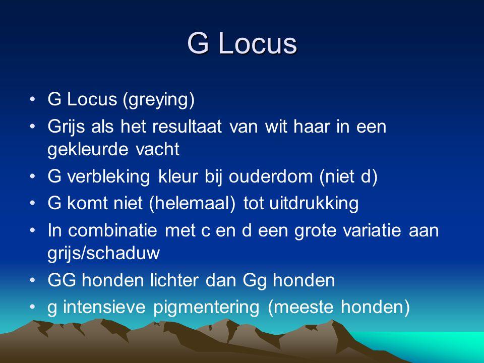 G Locus G Locus (greying) Grijs als het resultaat van wit haar in een gekleurde vacht G verbleking kleur bij ouderdom (niet d) G komt niet (helemaal)