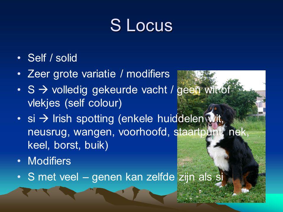 S Locus Self / solid Zeer grote variatie / modifiers S  volledig gekeurde vacht / geen wit of vlekjes (self colour) si  Irish spotting (enkele huidd
