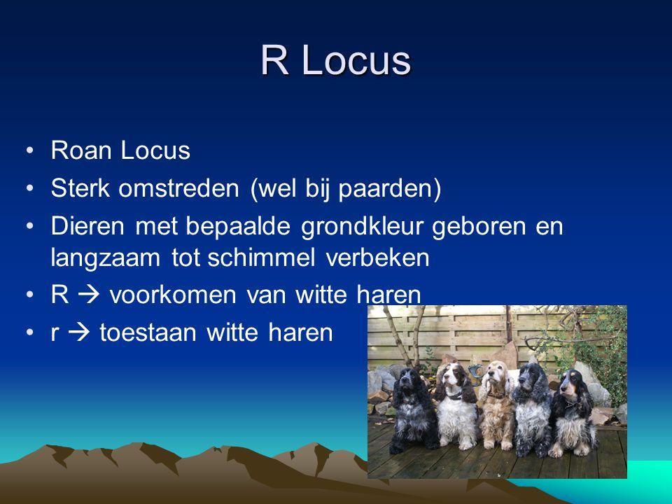 R Locus Roan Locus Sterk omstreden (wel bij paarden) Dieren met bepaalde grondkleur geboren en langzaam tot schimmel verbeken R  voorkomen van witte