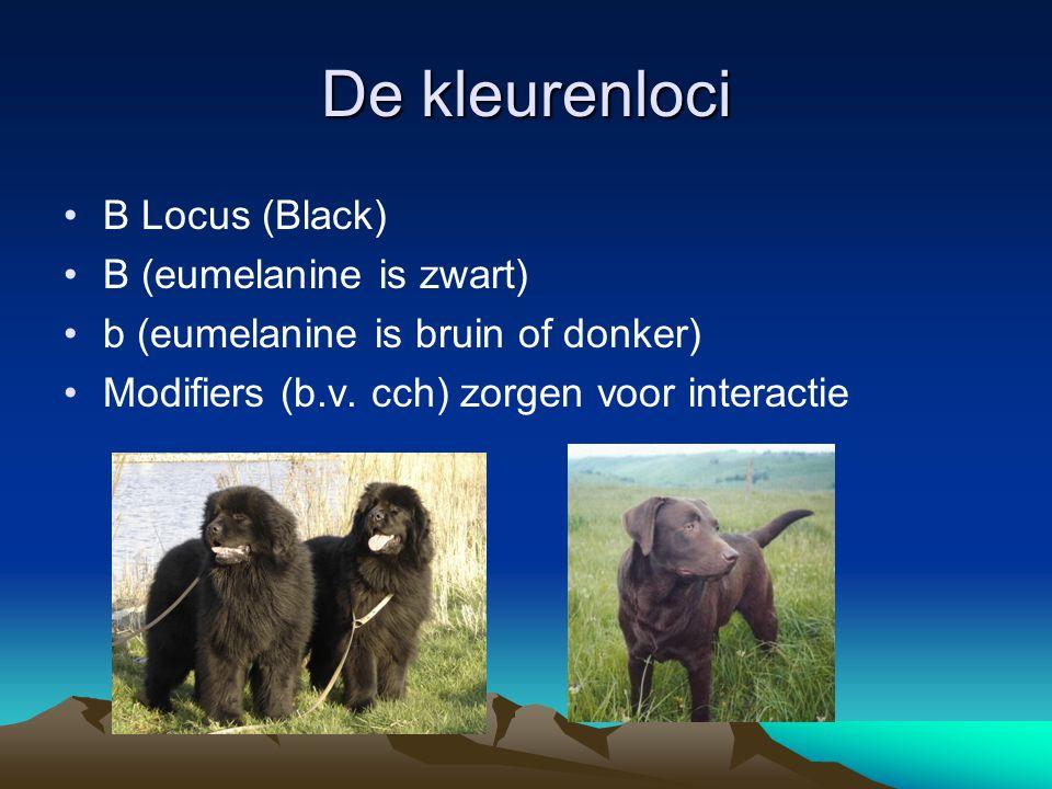 De kleurenloci B Locus (Black) B (eumelanine is zwart) b (eumelanine is bruin of donker) Modifiers (b.v. cch) zorgen voor interactie