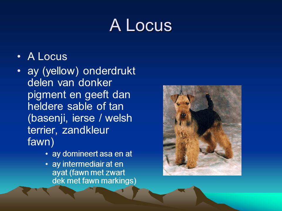 G Locus G Locus (greying) Grijs als het resultaat van wit haar in een gekleurde vacht G verbleking kleur bij ouderdom (niet d) G komt niet (helemaal) tot uitdrukking In combinatie met c en d een grote variatie aan grijs/schaduw GG honden lichter dan Gg honden g intensieve pigmentering (meeste honden)