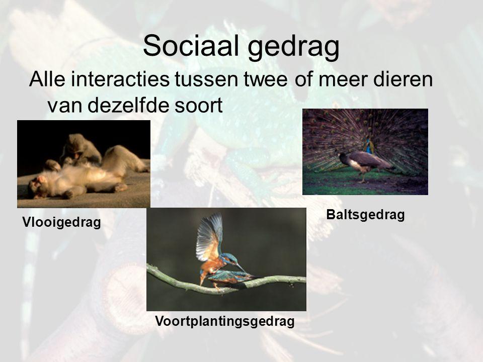 Sociaal gedrag Alle interacties tussen twee of meer dieren van dezelfde soort Vlooigedrag Voortplantingsgedrag Baltsgedrag