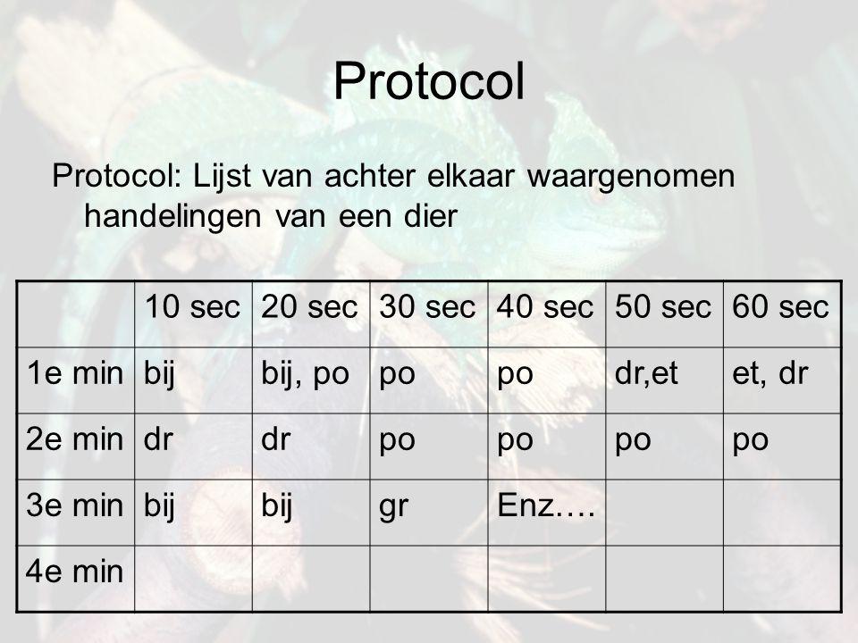 Protocol Protocol: Lijst van achter elkaar waargenomen handelingen van een dier 10 sec20 sec30 sec40 sec50 sec60 sec 1e minbijbij, popo dr,etet, dr 2e