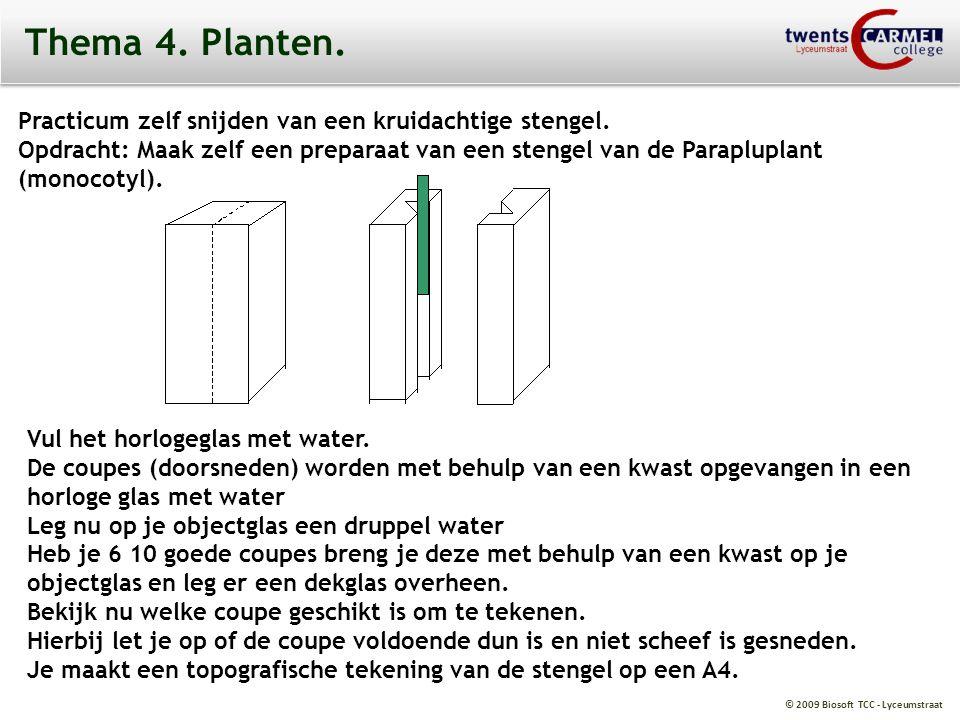 © 2009 Biosoft TCC - Lyceumstraat Thema 4. Planten. Practicum zelf snijden van een kruidachtige stengel. Opdracht: Maak zelf een preparaat van een ste